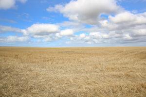 Normandia paesaggio rurale
